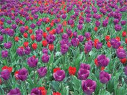 Irisposnerhonmentbrooksid
