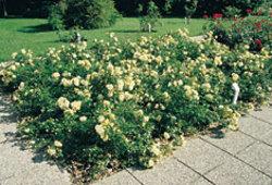 Flowercarpet2_1