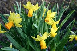 Narcissusjefire030305_1