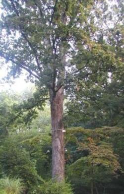 Tree1_1_1