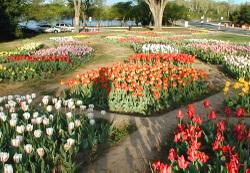 Tuliplib2